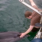 An Atlantic dolphin visits the Joneses on a Charter Ireland trip