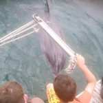 A curious dolphin visits the Jones family on an overnight Aran Trip with Charter Ireland